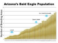 Arizona bald eagle population increases since 1971 to 2013
